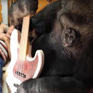 Gorilla Flea